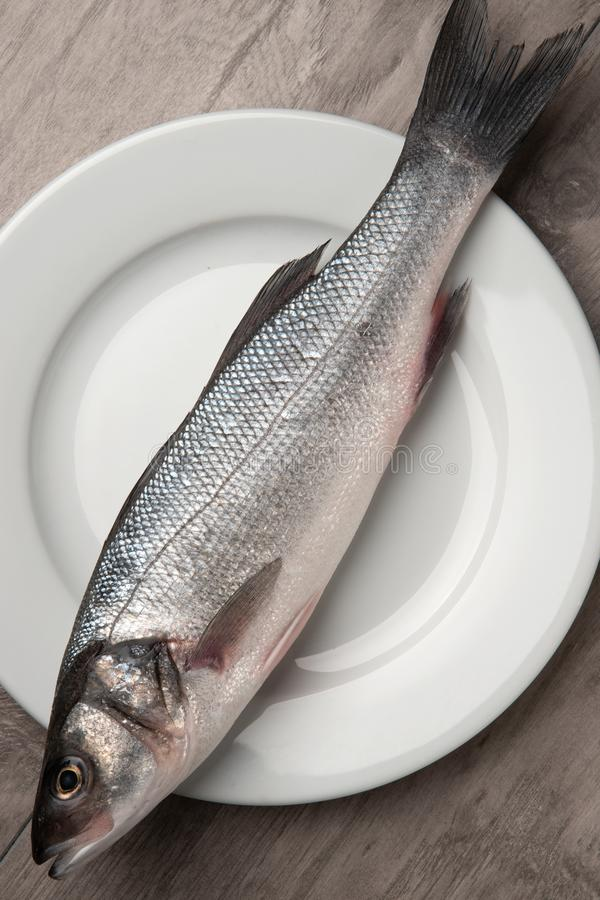 Sea bass fish. On white plate royalty free stock photography