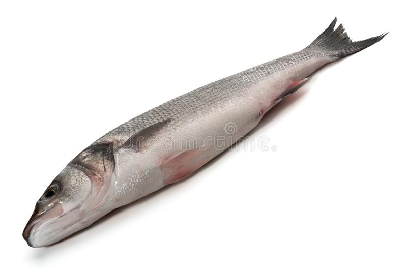 Sea bass fish on white. Background royalty free stock photo