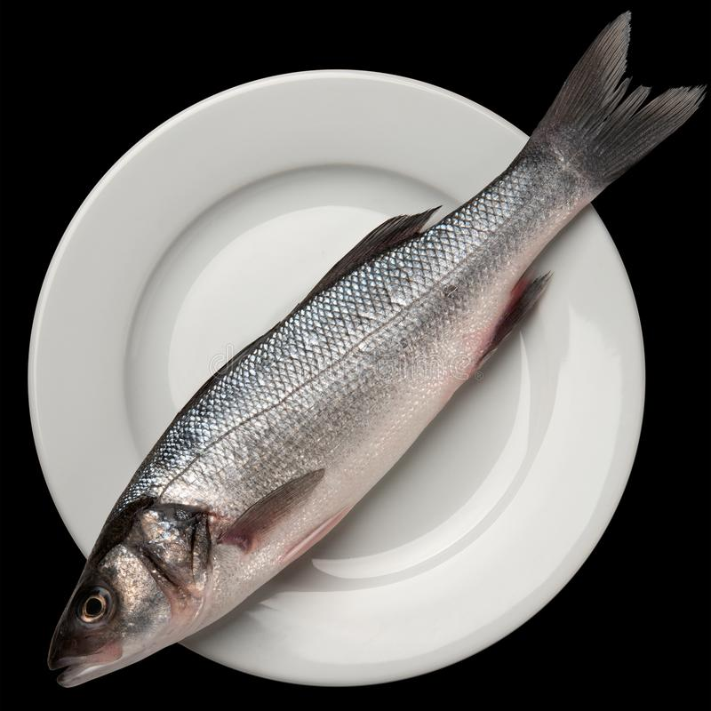 Sea bass fish on white. Plate stock photos