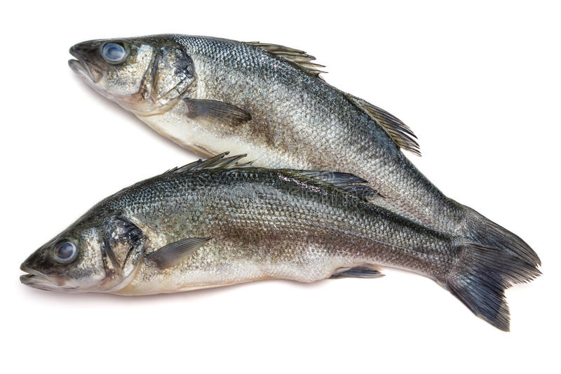 Sea bass fish. On withe background stock photography