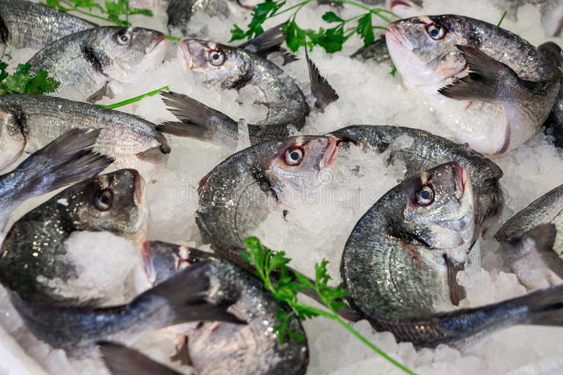 Sea bass fishes on ice and parsley. Fresh sea bass on ice in the greek fish shop lined up for sale refreshed parsley. Sea bass fishes on ice and parsley stock photography