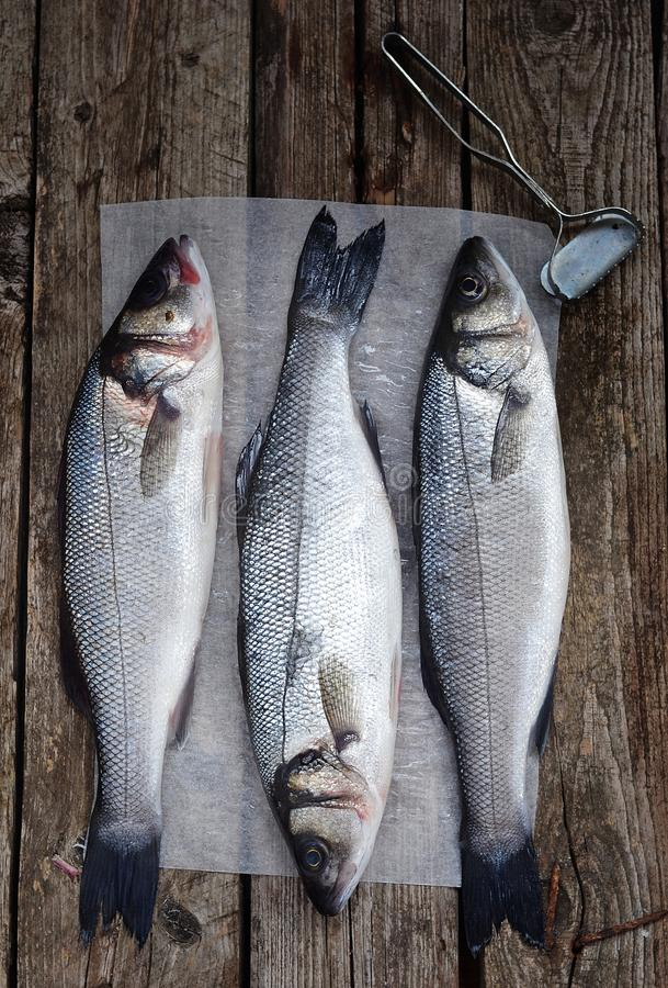 Sea bass. Fresh, raw sea bass on the catching board royalty free stock images