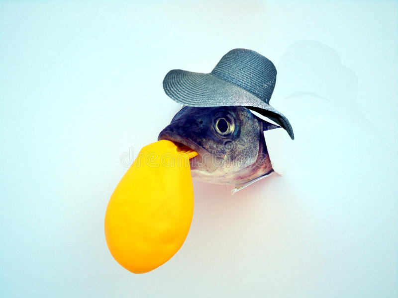 The sea bass with the hat. While blowing a yellow balloon stock images