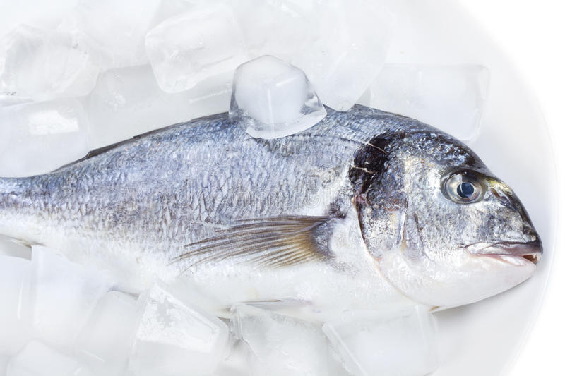 Download Sea bass on ice stock image. Image of background, bass - 22990227