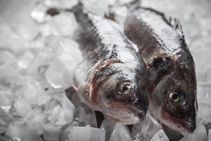 Sea bass on ice royalty free stock images