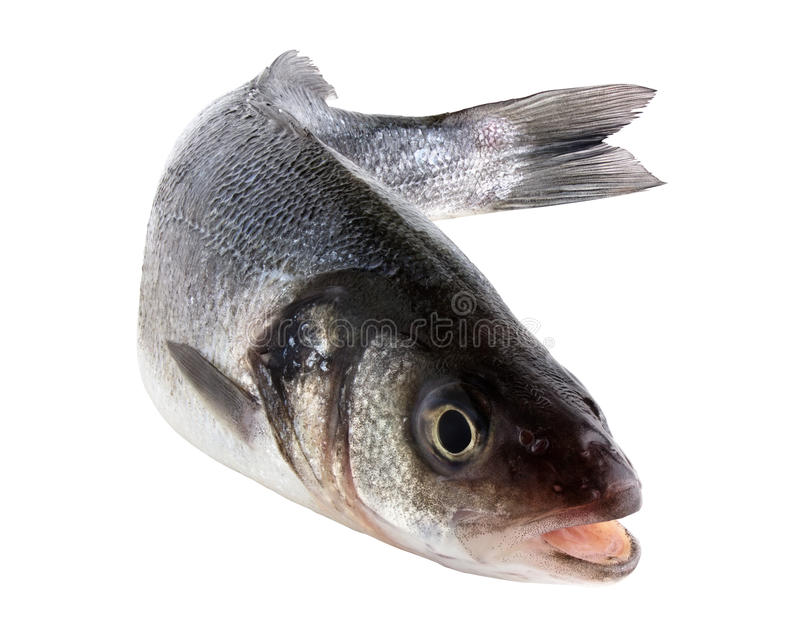 Sea bass stock photography