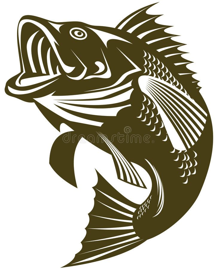 Sea Bass jumping stock images