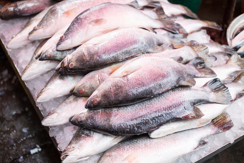 Sea bass raw material seafood. Which fresh by ice in market stock photo