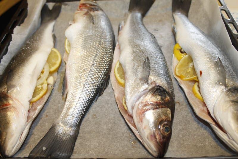 Sea bass. Raw sea bass stuffed with lemon royalty free stock photos