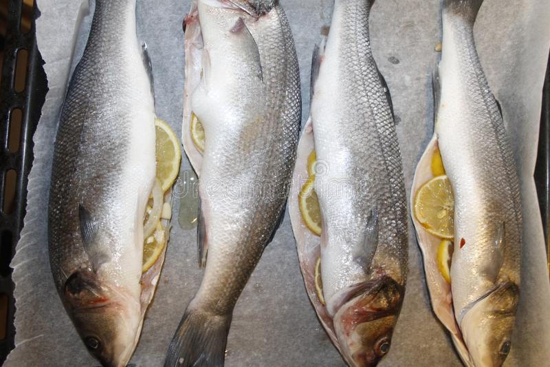 Sea bass. Raw sea bass stuffed with lemon stock photography
