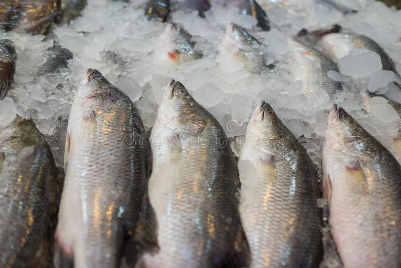 Sea bass at seafood market. Thailand royalty free stock photo