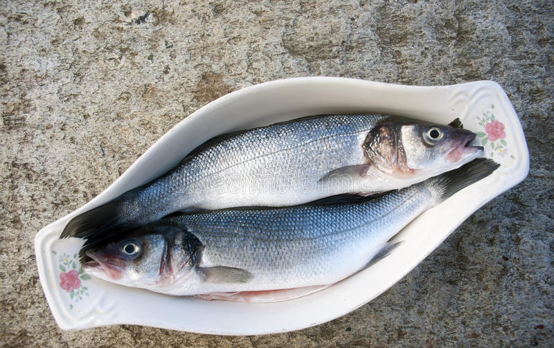Sea bass. Two sea bass before cooking royalty free stock images