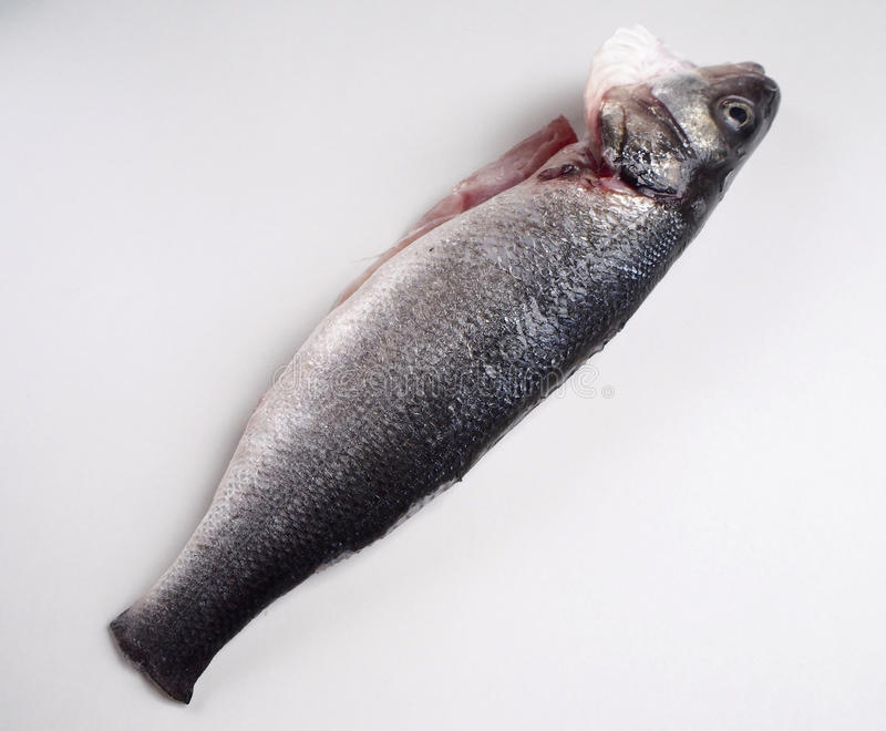 Sea bass. On white background stock photography