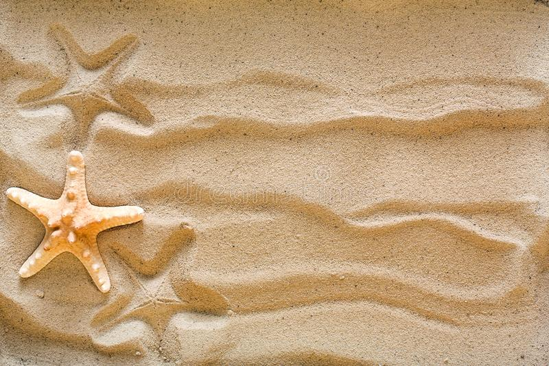 Sea beach sand and seashells background, natural seashore stones and starfish stock photo