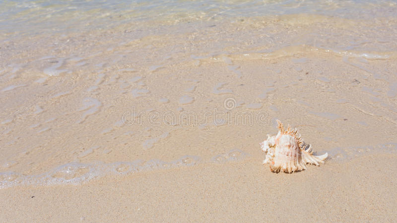 Sea beach and shell royalty free stock image