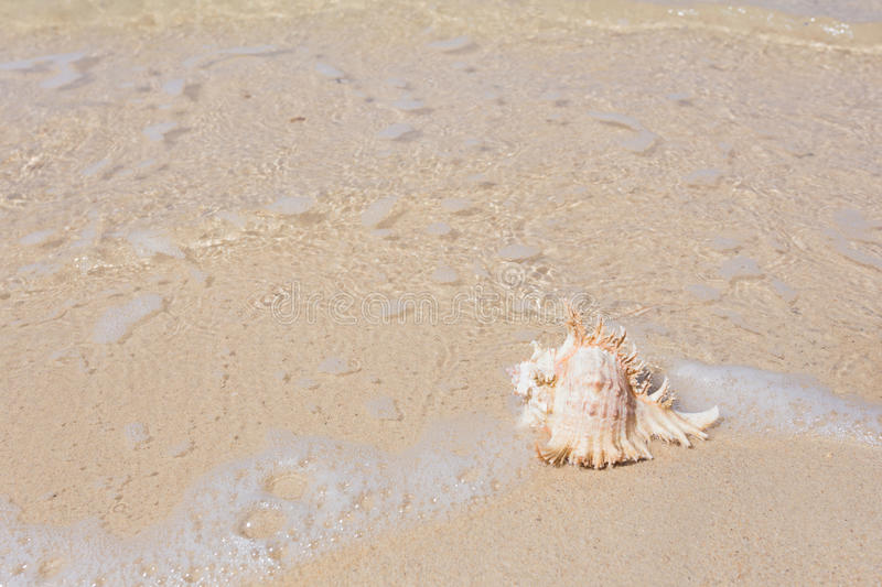 Sea beach and shell stock photography