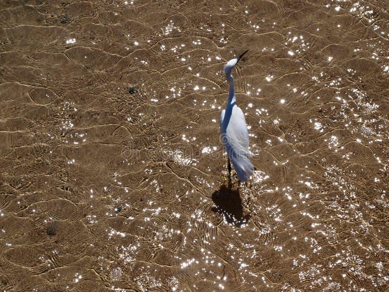 Sea bird on beach stock photography