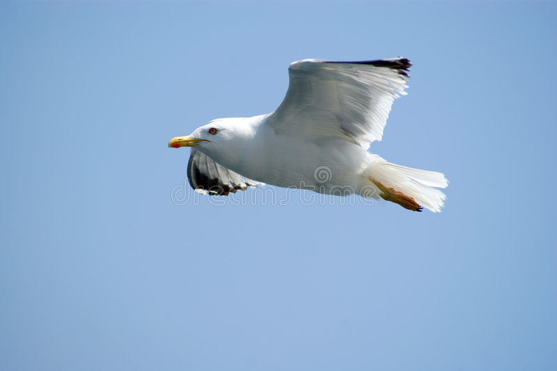 Sea Bird On Blue Sky Royalty Free Stock Photos