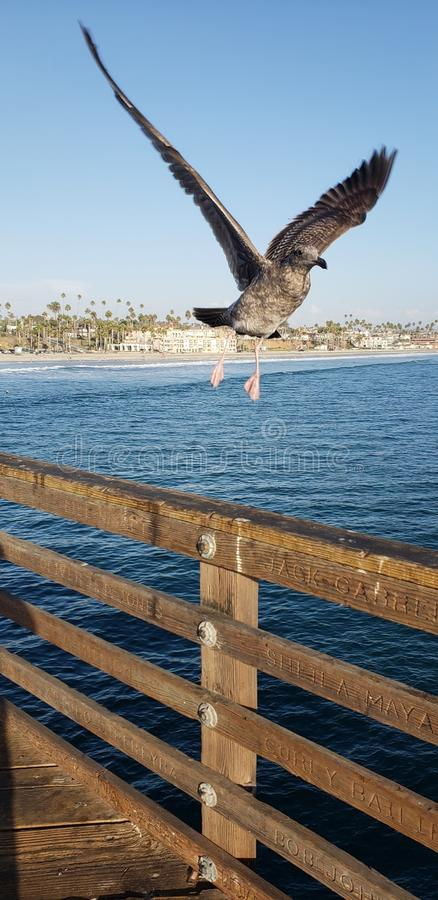 Sea bird flying off pier over ocean stock photo