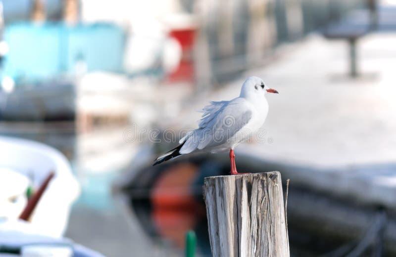 Sea bird standing on a ship holder pole stock image