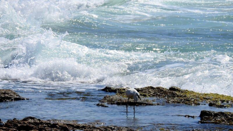 Sea bird in summer stock image