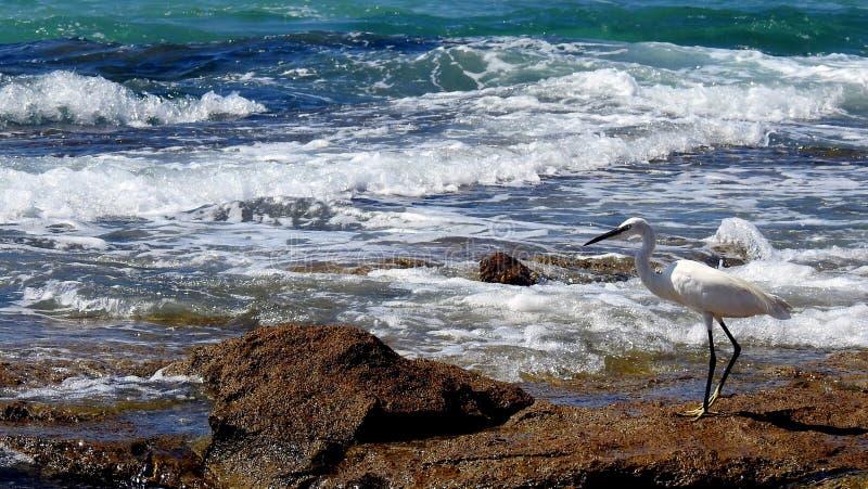 Sea bird in summer stock images
