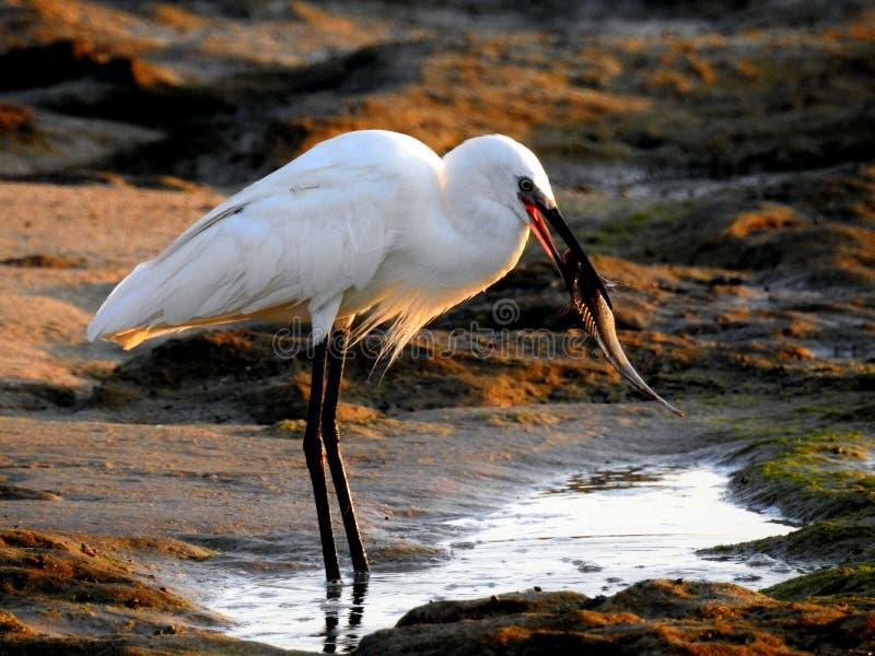 Sea bird in summer royalty free stock image