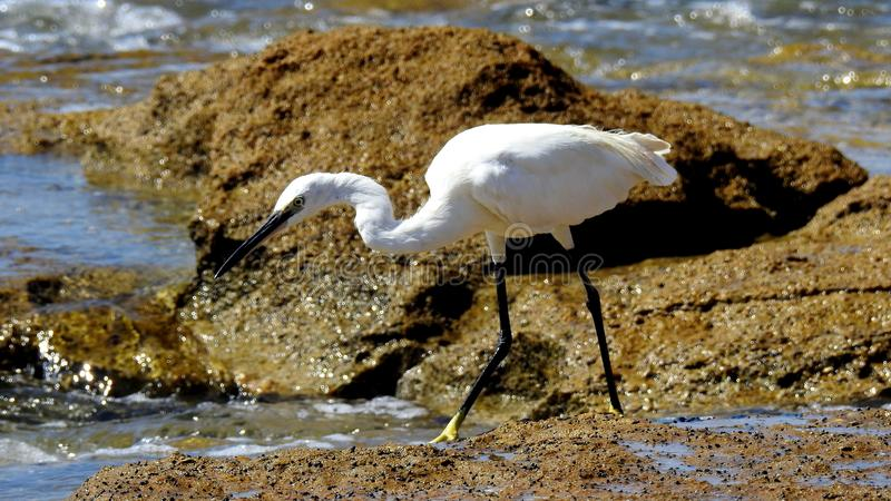 Sea bird in summer royalty free stock photo