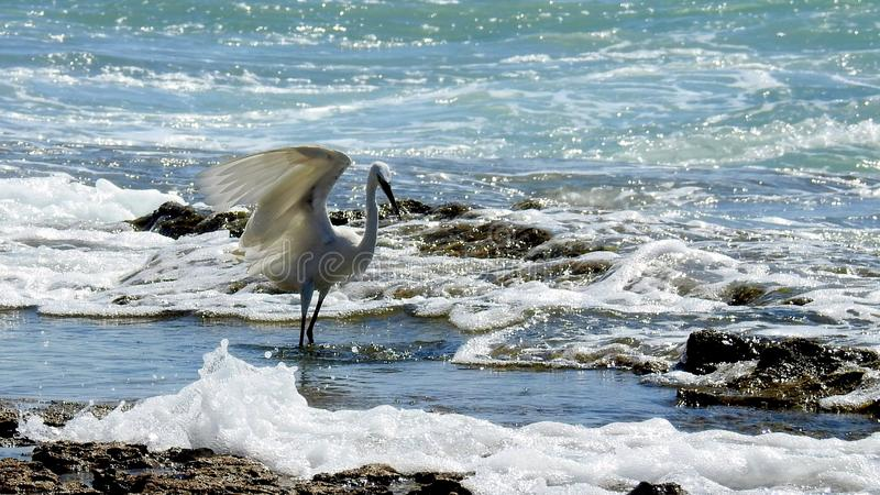Sea bird in summer royalty free stock photography