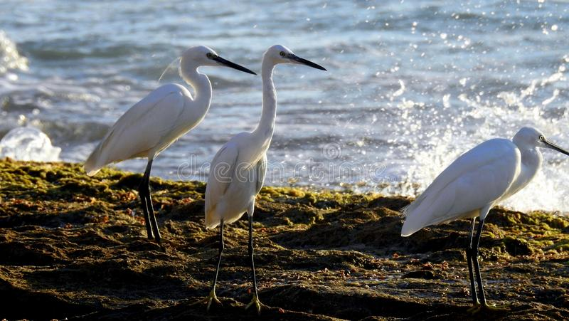 Sea bird in summer royalty free stock images