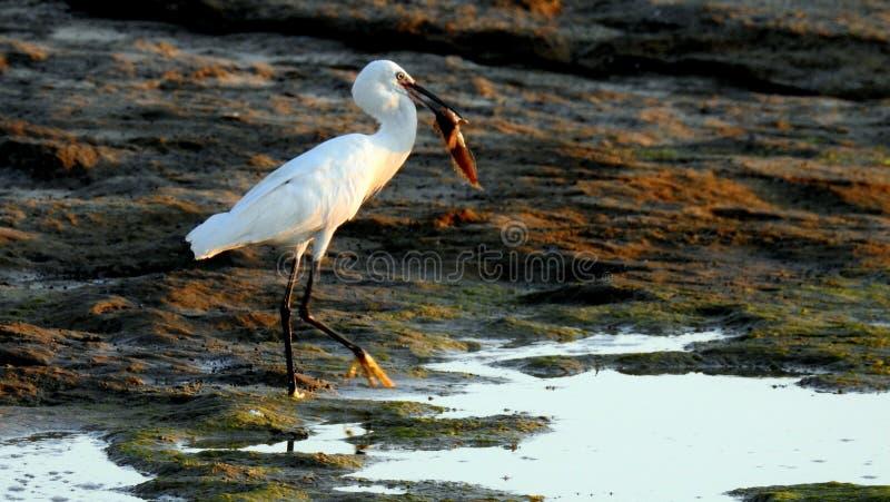 Sea bird in summer stock photography