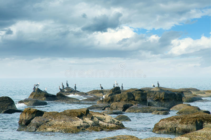 Download Sea and birds stock image. Image of cloud, landscape - 22142519