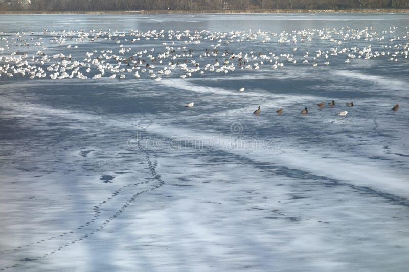 Sea of Birds stock photos