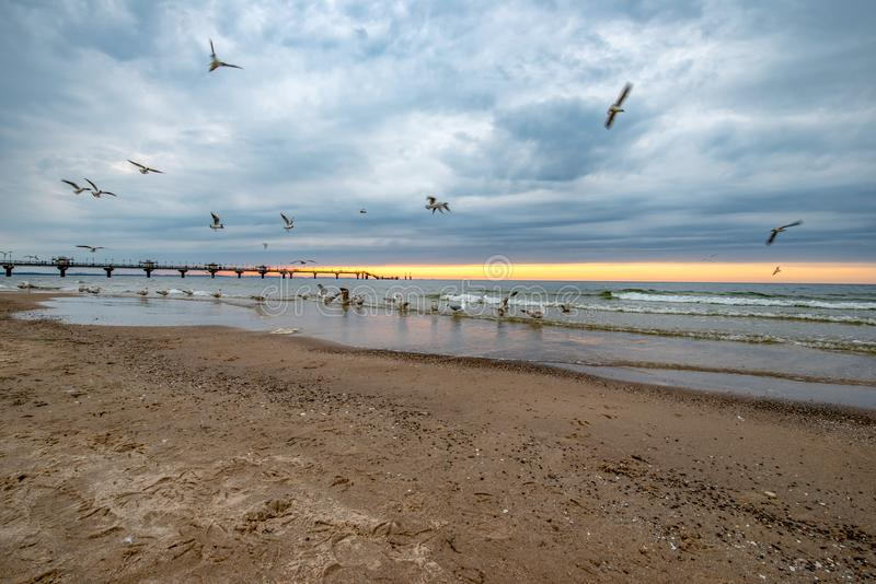 Sea birds on the beach. In the background you can see the sunset and the large pier. Miedzyzdroje, Poland royalty free stock photos
