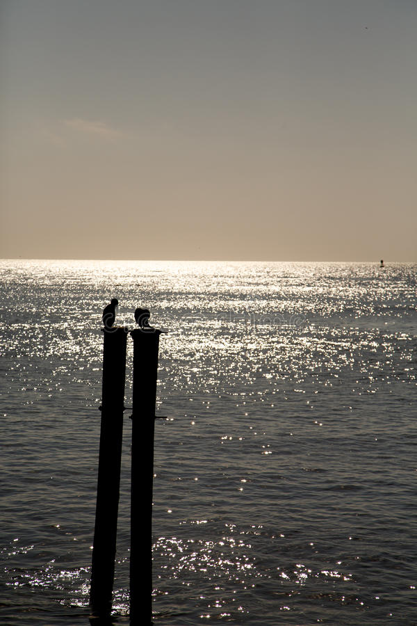 Download Sea Birds On Posts Silhouette Stock Photo - Image: 29599354