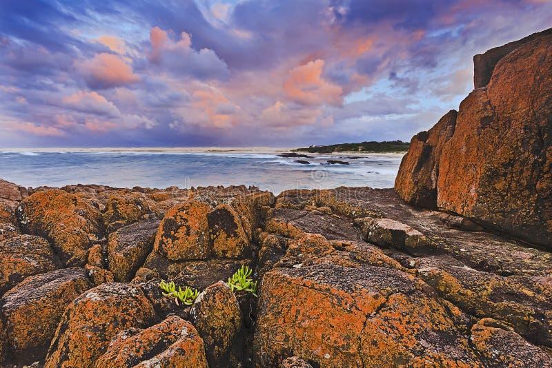 Sea Birubi Red rocks plant royalty free stock photos
