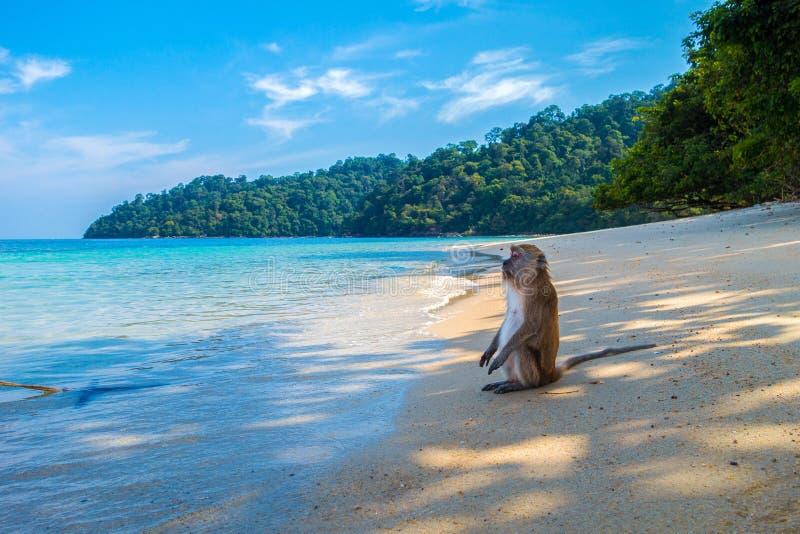 Sea, Body Of Water, Sky, Beach royalty free stock photos
