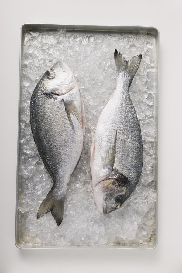 Sea bream. Two sea bream on crushed ice royalty free stock images