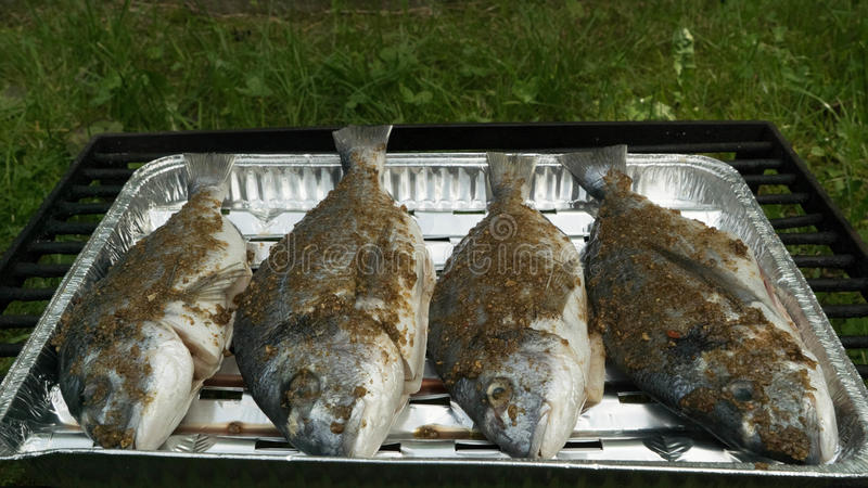 Sea bream marinated in front of the grill. royalty free stock photos