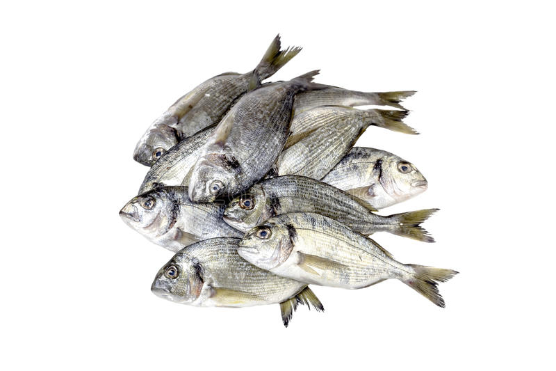 The sea bream. Sea bream on a white background closeup stock photos