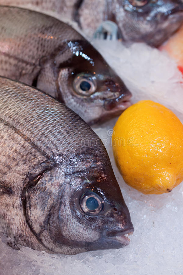 Download Sea Breams On Ice At The Market Stock Image - Image: 30556919
