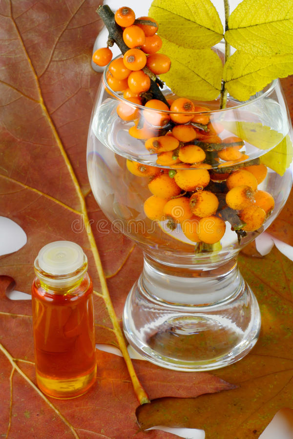 Sea-buckthorn berries and autumn leaves stock images