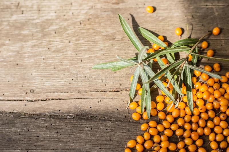 Sea buckthorn berries on a wooden background. Autumn decorative frame or border with fresh ripe sea-buckthorn berries and old wood royalty free stock image