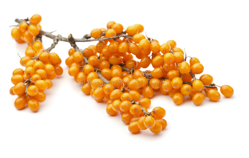 Sea buckthorn. Branch of sea buckthorn berries on white royalty free stock image