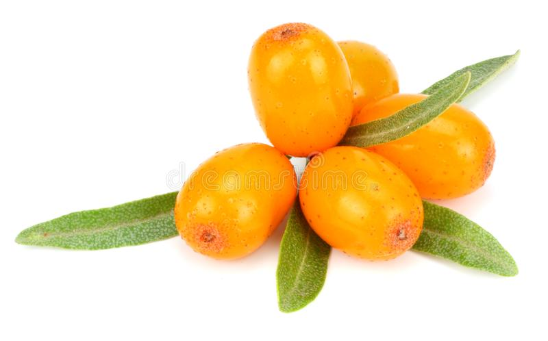 Sea buckthorn with green leaf isolated on white background royalty free stock photo
