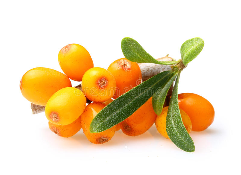 Sea buckthorn isolated. On the white background stock photography