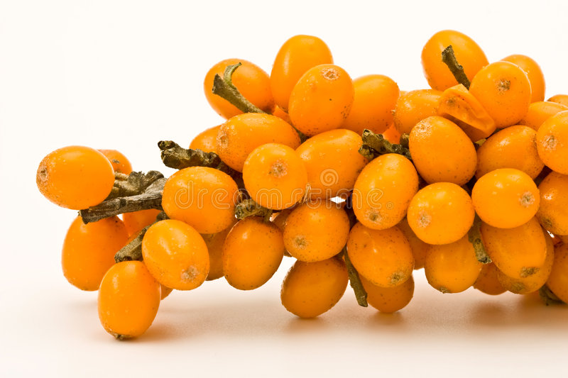 Sea-buckthorn. macro royalty free stock photography