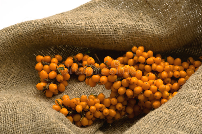 Sea-buckthorn on texture hessian stock images