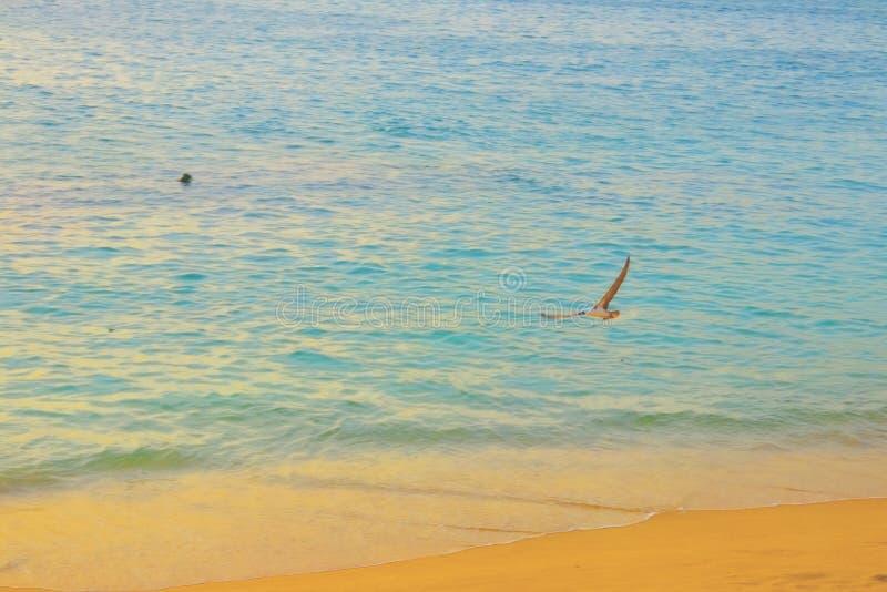Calm sea in autumn time royalty free stock photos