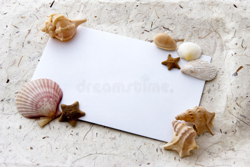 Sea card. White card with shells and marine stars - sea animals